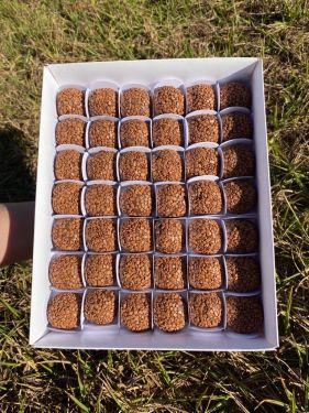 Caixa p/Doces 25x20cm Branca Tampa Baixa pct/6un Max Paper
